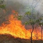 Soft-genocide in Kurdistan, Iranian ecological terrorism